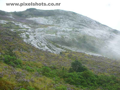 flowers covering mountain slopes in munnar hillstation,violet flowers of neelakurinjy covering mountain slope