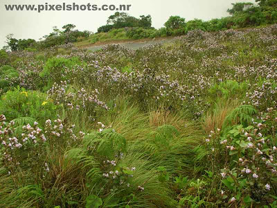 rare flowers and plants of neelakurinji photographed from rajamalah munnar