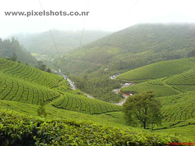 scenic landscape scenery of green tea plantations on mountain slopes of munnar kerala