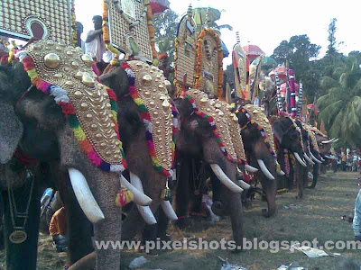 elephants ornamented with nettipattoms in a celebration from kerala temples,domestic elephants in kerala photographs,elephant-names,kerala-elephants-photo