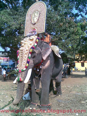 Elephant of kerala named as guruji ayyappan,elephant-photos,kerala-elephants,elephant-pictures,elephant-mahout,decorated-elephant,nettipattom,thidambu