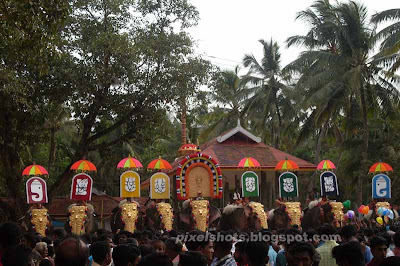 elephants-kerala,elephant,decorated-elephants-in-hindu-temple-festival,kerala-festivals,hindu-temple-celebrations-kerala,elephants-festivals,decorated-elephant-in-pooram,elephant-nettipattom,