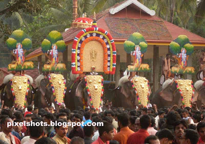 elephants-thrissur,kerala-festivals,elephant-festival,hindu-temple-festivals,kerala-elephants,pooram-elephants,elephant-ornaments,kerala-domestic-elephants,thrissur-temple-festivals,thrisur-poorams,kerala-cultural-festivals