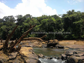 dry tree branches between river rocks,dry river topography of a kerala river named kallada