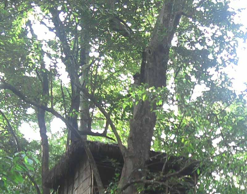 Forest Tree House @ Thenmala Eco Tourism Deer Park / Kerala / India.Thatched Tree house built of CanesBambooRopes etc for tourists. & Forest Tree House @ Thenmala Eco Tourism Deer Park / Kerala / India ...