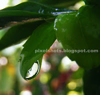 rain drop photo in macro closeup camera focus,rain droplet in garden plant green leaf,droplet closeup