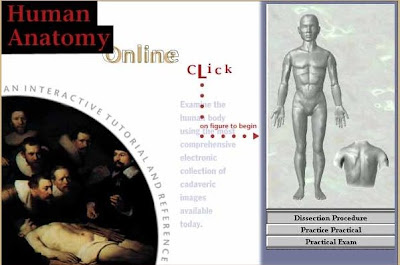 Best anatomy websites