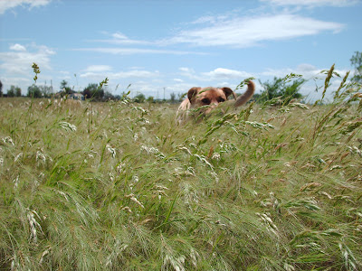 dog hiding in the grass