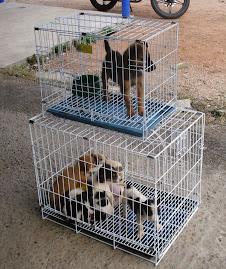 Adopta un perrito