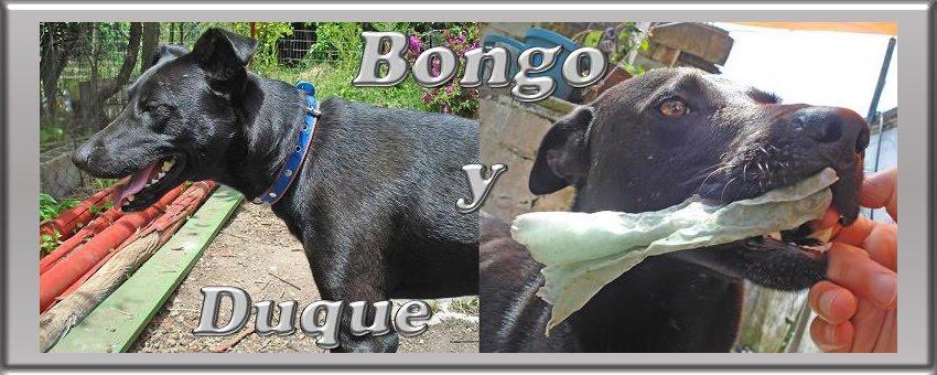 Bongo y Duque - Mis Perros