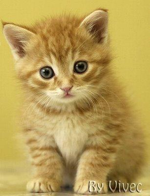 ... tahukah anda bahwa semua jenis kucing yang ada bera