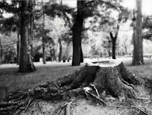 """""""Defendamos nuestros bosques"""""""