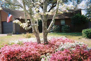 Front yard and azaleas