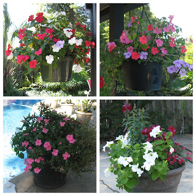 November Patio Flowers