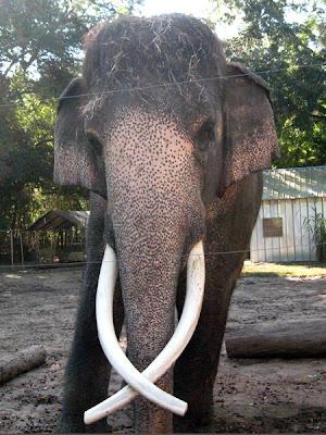 Luke the Elephant