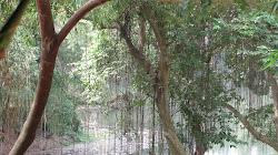 Like a rain forest