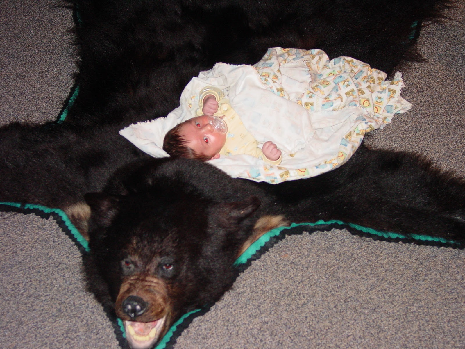 rug skin black inches p feet bear