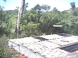 Kandang Indukan Bullfrog