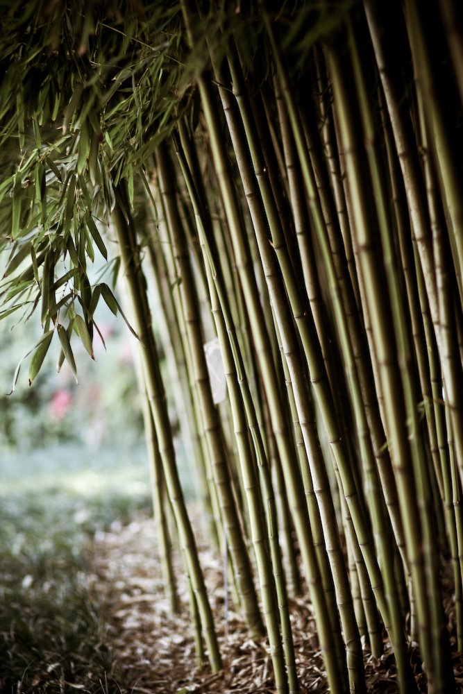 Huntington Library Bamboo Forest