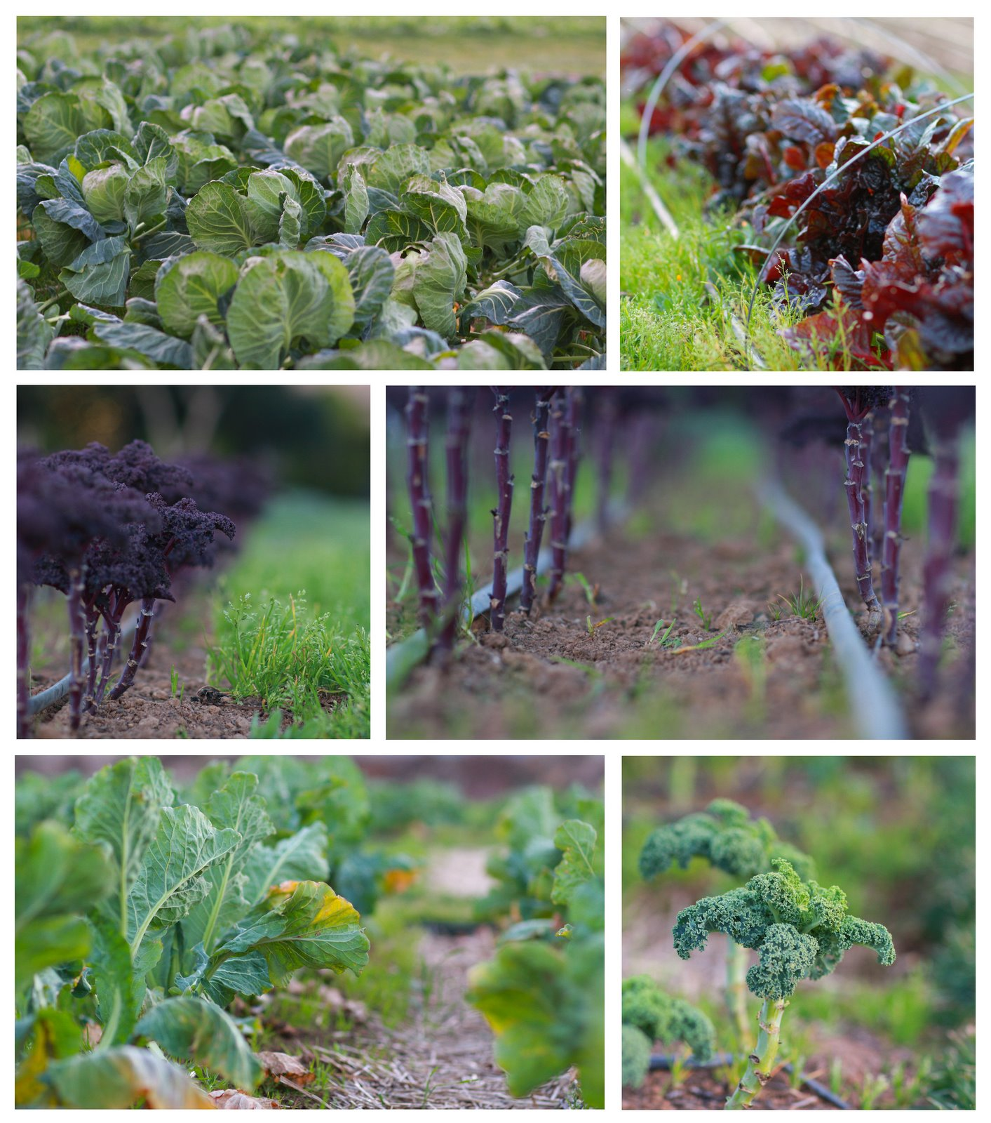 French Laundry Garden