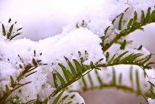Προστατέψτε τα φυτά σας από το χιόνι & τον πάγο