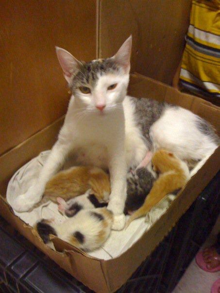 Bodega cat in box with newborn kittens