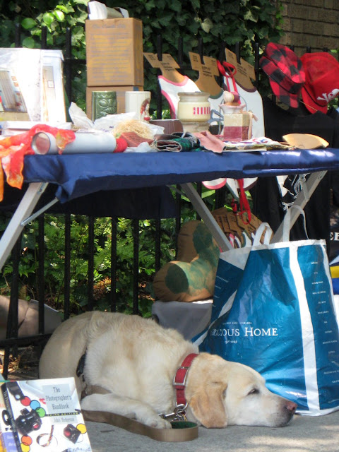 Dog sleeping at stoop sale