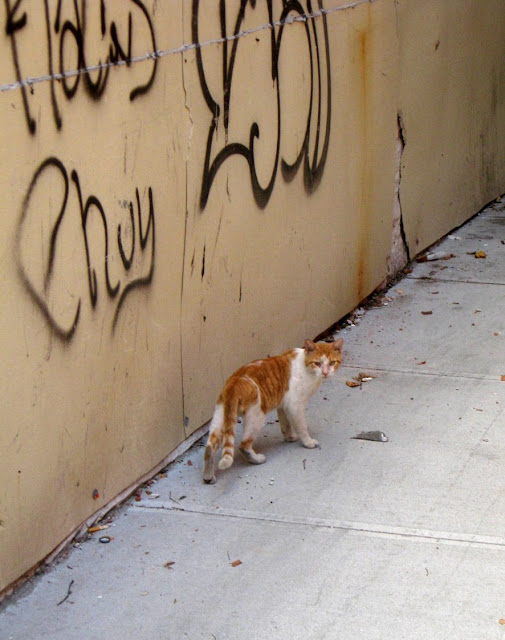 Cat in alley with graffiti