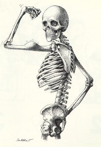 Imagens anatomia humana