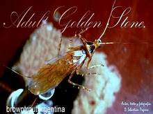 Atado Realista La Adult Golden Stone Fly