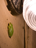 Click for Larger Image of Green Frog On Wall