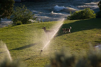 Click for Larger Image of Elk and Dog Playing In the Sprinkler