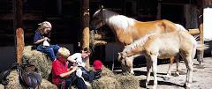 Reiturlaub und Reiterferien in Österreich