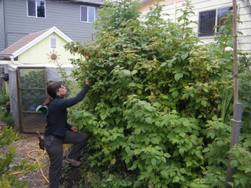 how to build netting raspberries
