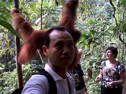 Jungle Trekking with Orang Utan in Bukit Lawang