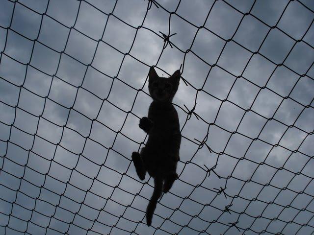 Cat Shelter Felix, Serbia: Negolina