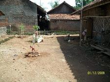 Posyandu Di Blok Balir Mekarjaya