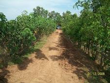 Lokasi Perkerasan Jalan di Blok Sarkamal Desa Situraja