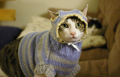 Cat Knitting Meme : Feline underground get a load of these sweater kittens