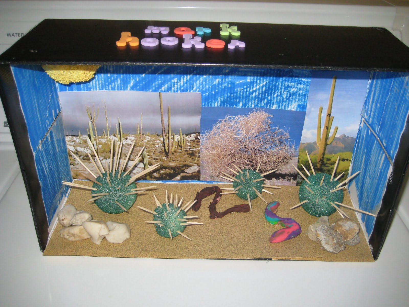 sonoran desert diorama at