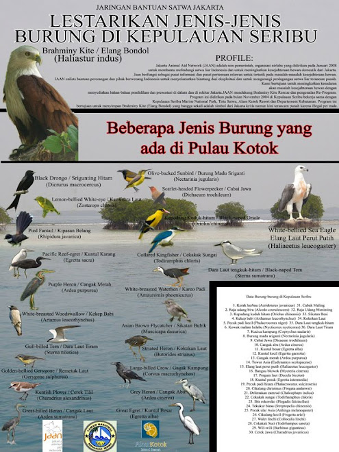 Birds of Kotok Island