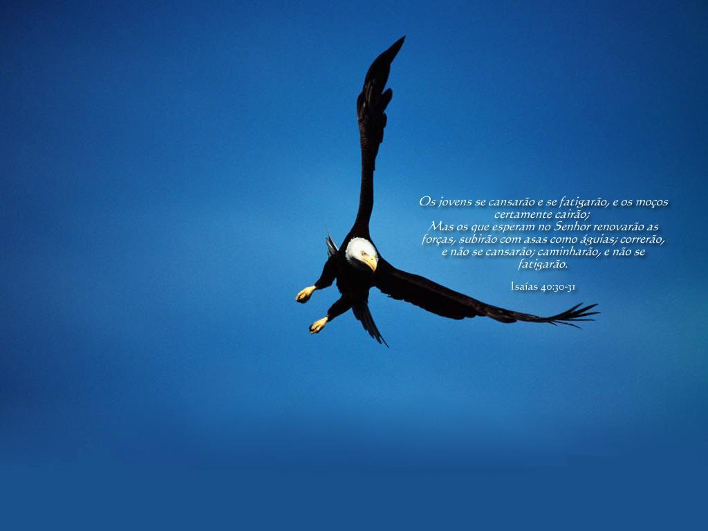 http://4.bp.blogspot.com/_RZtz7XKT4ZE/S7TsIIqNWSI/AAAAAAAAAfA/LlnNerFZg6E/s1600/isaias__4030-31_5b5.jpg