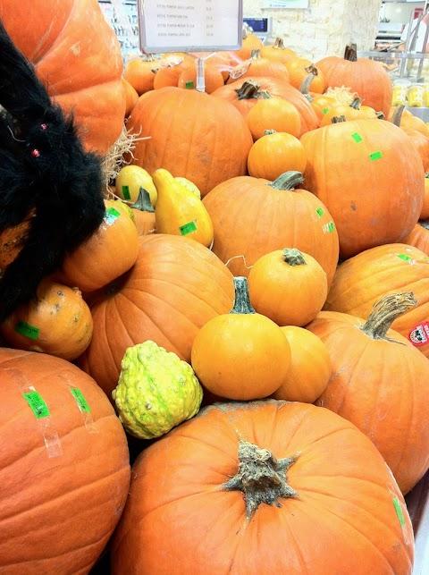 Pumpa / Pumpkin