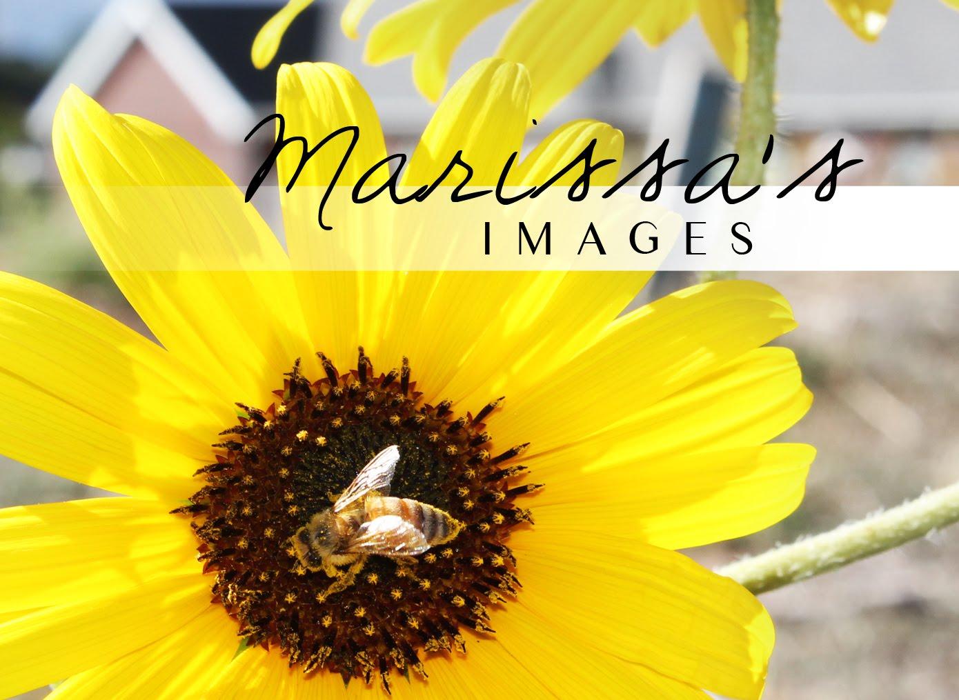 Marissa's Images