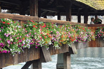 Close up of flowers on the outer railing of the wooden Chapel Bridge in Lucerne