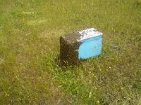 πωλουνται παραφυαδες 3-5 πλαισιων και μελισσια 10αρια με νεες μανες   απο ΦΕΒ εως ΣΕΠ
