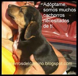Cachorritos para adoptar