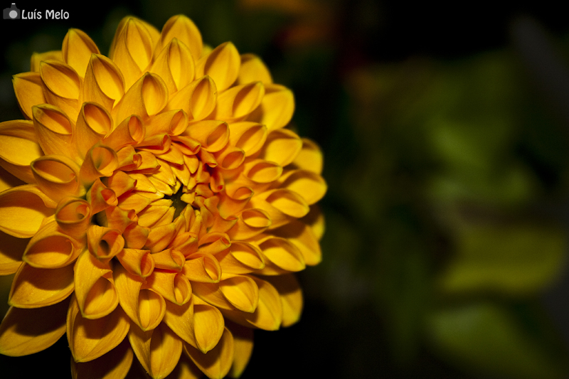 Flores IMG_1579