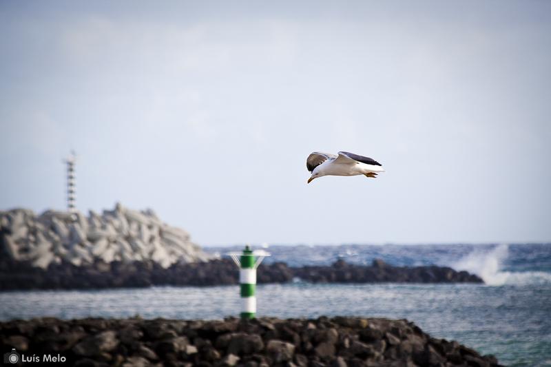 Mais um com gaivotas Gaivota