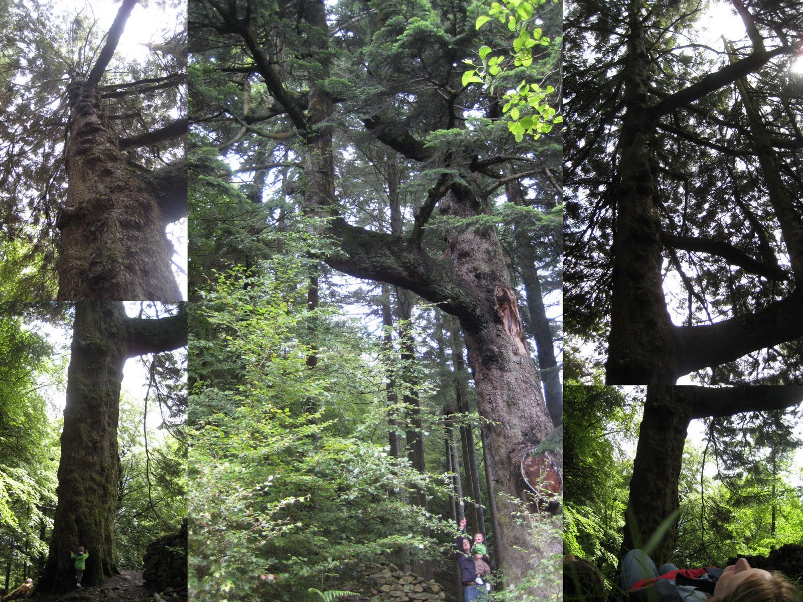 meetings with remarkable trees If searching for the book meetings with remarkable trees by thomas pakenham in pdf form, then you have come on to the loyal site we furnish the utter release of this book in doc, pdf, txt.